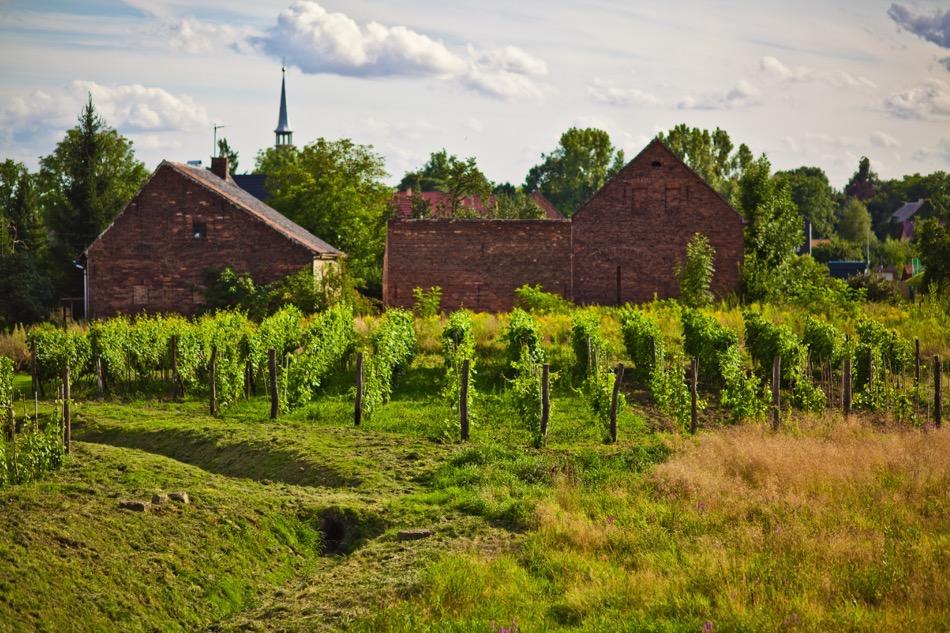 Weingut Hanna in Radmeritz